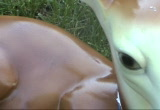 Still frame from: VJ Clips of Deer - By Carrie Gates